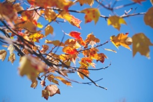 nature-leaves-fall-neature-medium